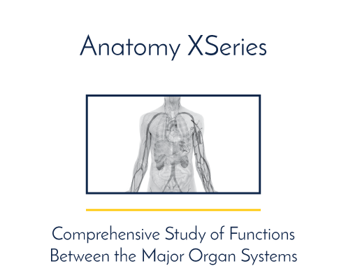 Human Anatomy: Structure and Function XSeries