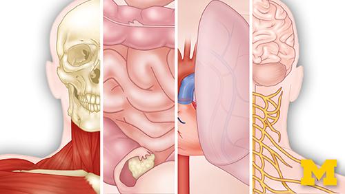 anatomy xseries
